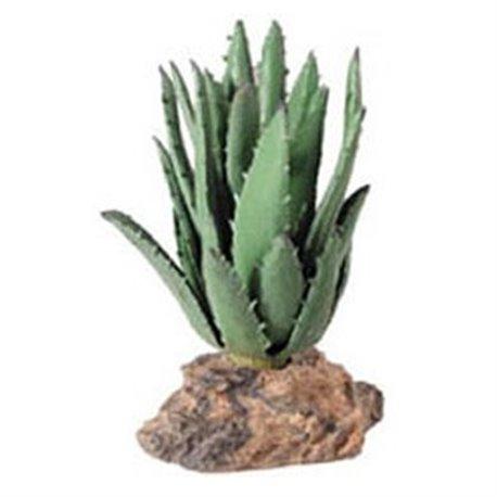 Cactus Sierra Madre