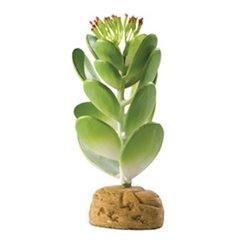 Cactus Jade PT2984